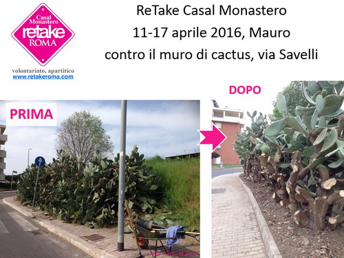 ReTakeCM_cactus_17apr16_2_resize