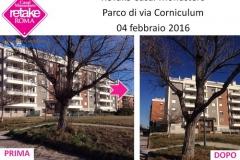 ReTakeCM_corniculum_04feb16_2